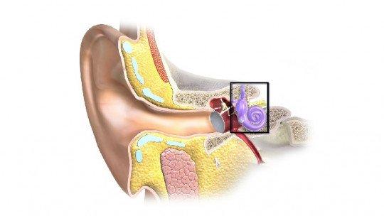 As 10 partes do ouvido e o processo de recepção de som 1