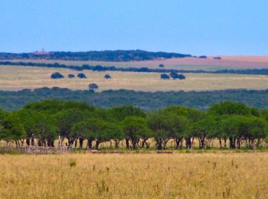 Pastagem dos pampas: características, flora, fauna, clima 1