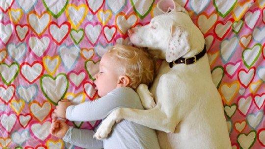 O cão que vence o abuso graças a um bebê 1