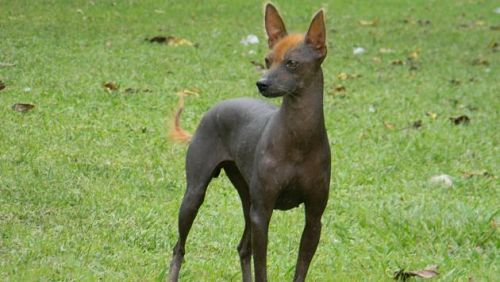 10 Animais estrangeiros do Peru e suas características 7
