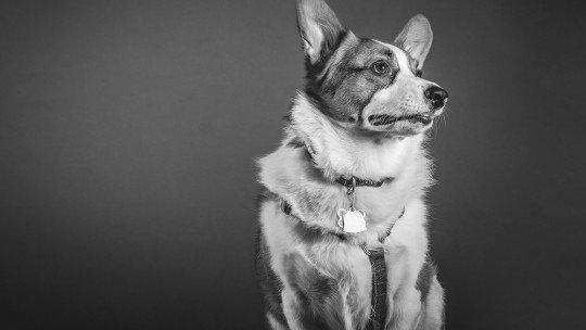 Cães que latem para nada: um sexto sentido? 1