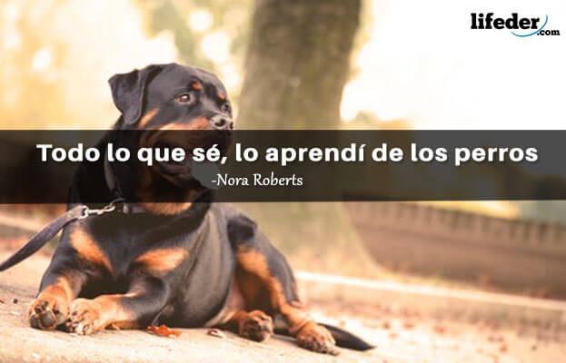 As 100 melhores frases para cães 7