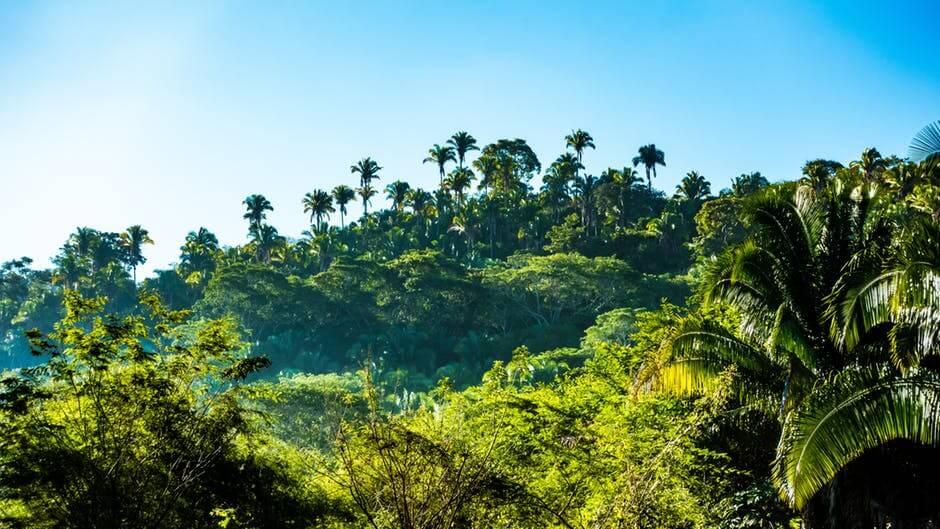 As 12 ecorregiões da Bolívia e suas características 1