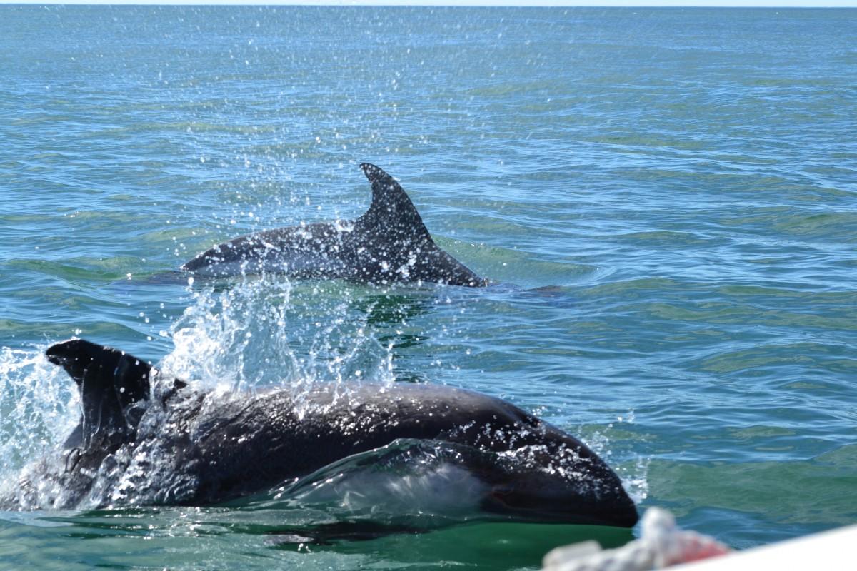 5 atrações turísticas de Baja California Sur 2