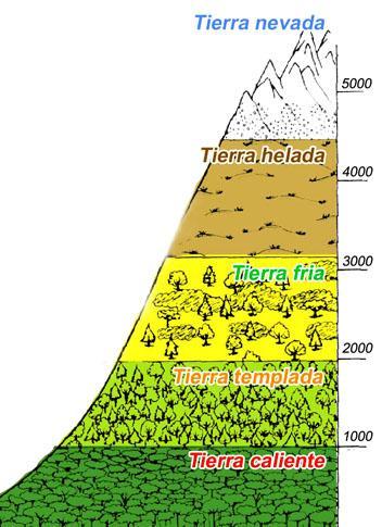 Pisos térmicos: história, classificação, flora e fauna 1
