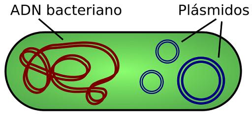 Tipos de células: Procariontes e eucariotos (com imagens) 21
