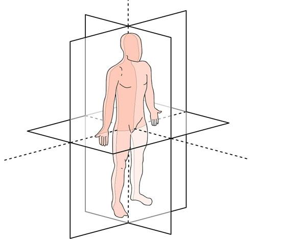 Planimetria anatômica: planos, eixos, termos de orientação 1