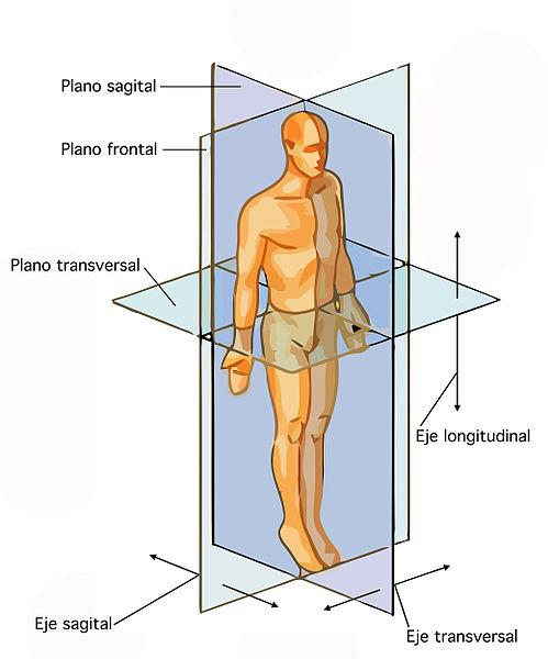 Planos anatômicos e eixos do corpo humano