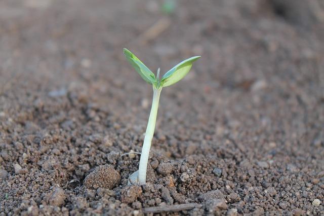 Nutrição vegetal: macronutrientes, micronutrientes, deficiências 3