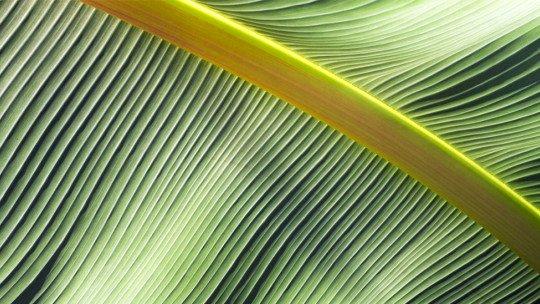As 18 melhores plantas de interior de acordo com a Psicologia Ambiental 1