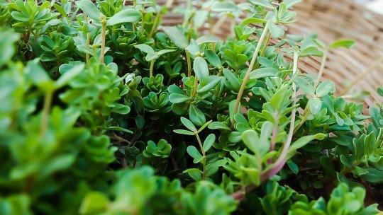 As 50 melhores plantas medicinais, seus efeitos e contra-indicações 1