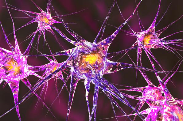 O que é plasticidade cerebral? 1