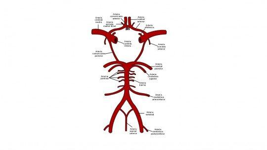 Polígono de Willis: partes e artérias que o formam 1