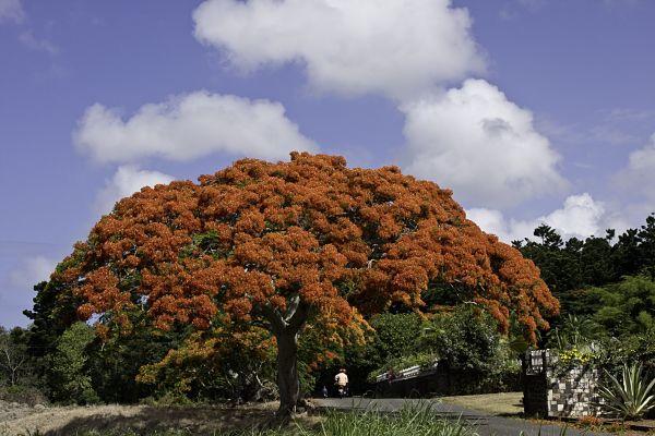A flora da costa peruana: espécies e conservação 5