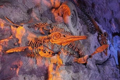 Permineralização de fósseis: o que é e processo 1