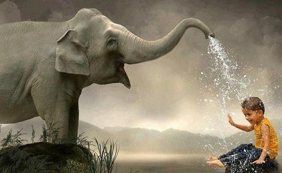 As 45 melhores frases de elefante 1