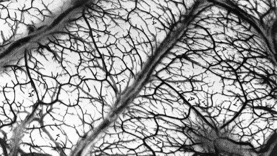 O problema da estrutura: o que é e o que nos diz sobre a mente humana 1