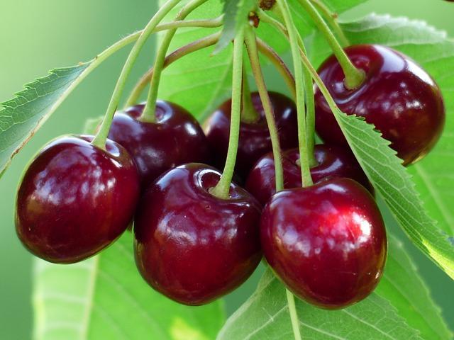 20 frutas em Kaqchikel (com pronúncia) 7