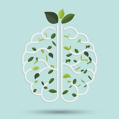 Psicologia Ambiental: Características e Teorias Principais 3