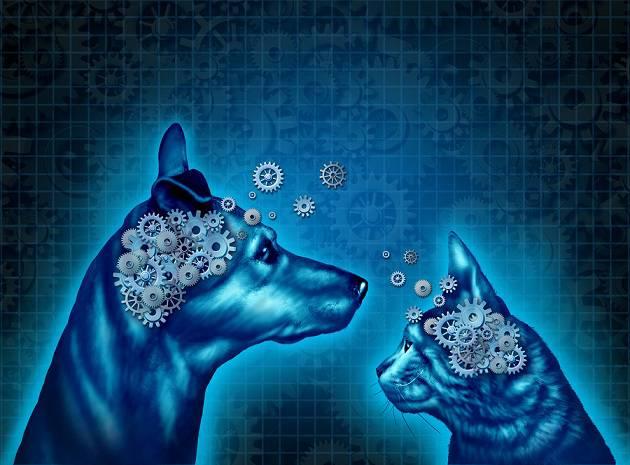 Psicologia comparada: história, que estudos e espécies 1