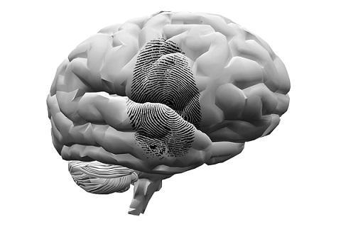 Psicologia Forense: Origens, Especialidades, Funções 1