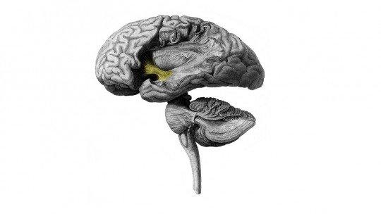 Psicopatia: o que acontece na mente do psicopata? 1