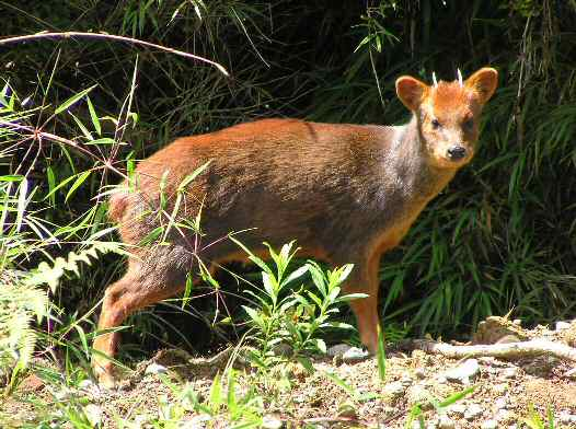 24 Animais em perigo de extinção no Peru 4