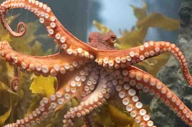 Os 27 animais marinheiros invertebrados mais incríveis 19