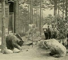 Mudanças que a biodiversidade sofreu nos últimos 50 anos 1