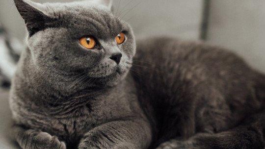 O que a cor cinza significa em psicologia? 1