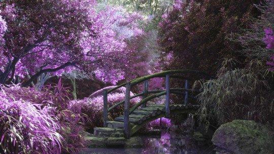 O que significa cor lilás em psicologia? 1