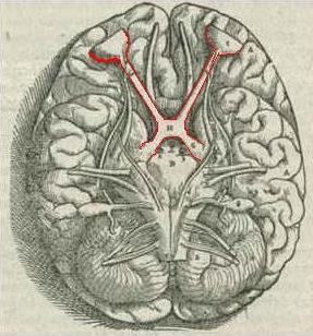 Quiasma óptico: características, anatomia e lesões 1