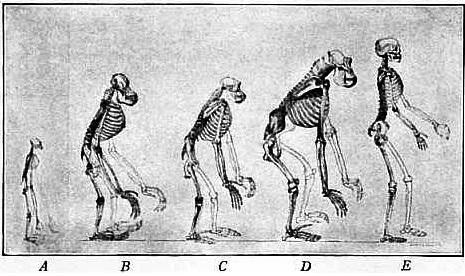 Quais são os ramos da antropologia? 1