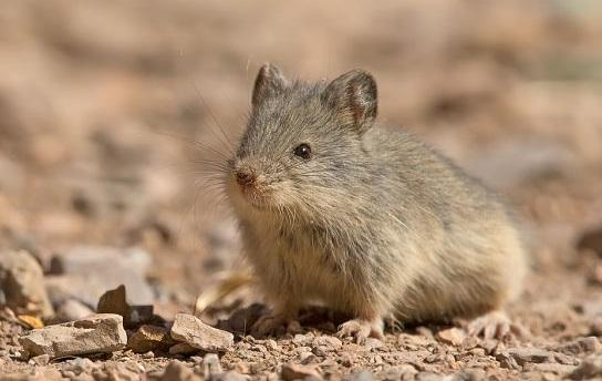 O que são animais insetívoros? 50 Exemplos 2
