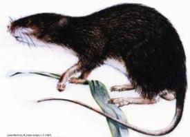 71 animais extintos em todo o mundo (e causas) 17