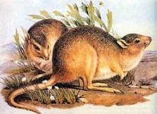 71 animais extintos em todo o mundo (e causas) 19