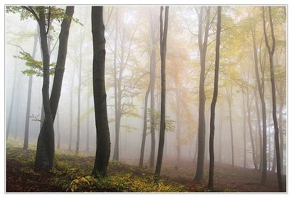 Recursos florestais: características, tipos e usos 2