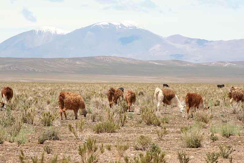 Quais são os recursos naturais da Argentina? 1