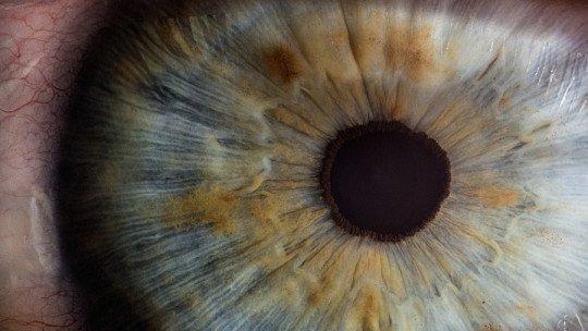 Reflexo fotomotor: o que é e como funciona a reação da pupila 1