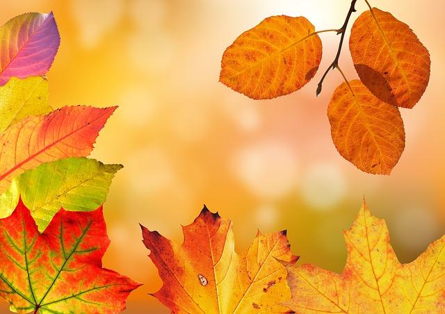 Os 160 melhores ditados de outono 1
