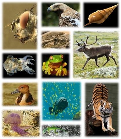 Animalia kingdom: características, tipos, reprodução, nutrição 5
