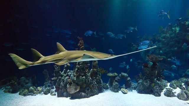 O que é o alívio do oceano? 1