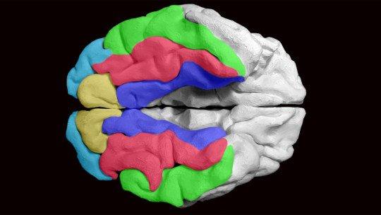 Reserva cognitiva: o que é e como nos protege da demência 1