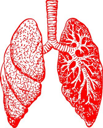 Respiração pulmonar: características, processo, fases 4