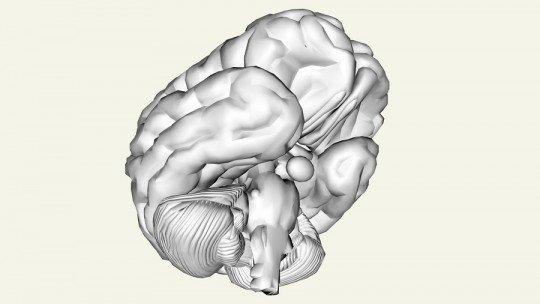 Ritmos circadianos: o que são e em que funções biológicas intervêm 1