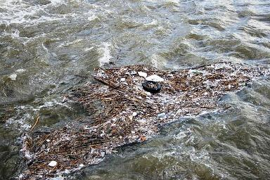 5 Atividades e comportamentos que causam poluição da água 1