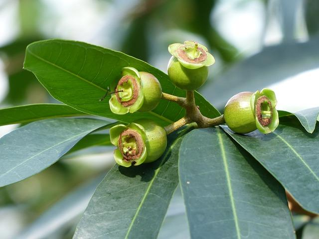 Myrtaceae: características, habitat, taxonomia e classificação 2