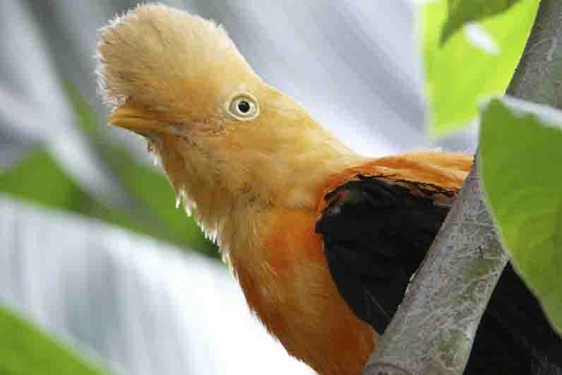 15 Animais da Serra do Perú 3