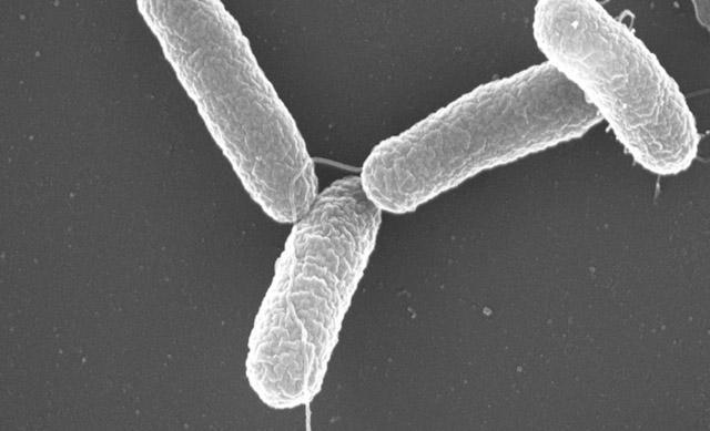 As 10 doenças microbianas mais comuns 6