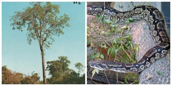 Flora e fauna de Salta: espécies mais representativas 1